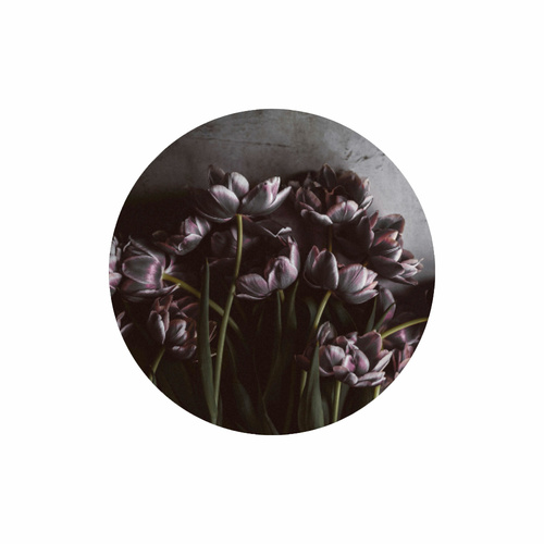 Bild Circle Art - Dark Tulips - Möbel Preiss