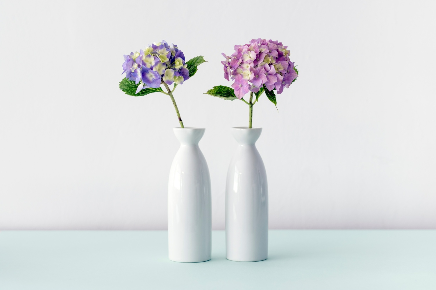 Violet and pink hydrangea flowers in two white vases - Möbel Preiss